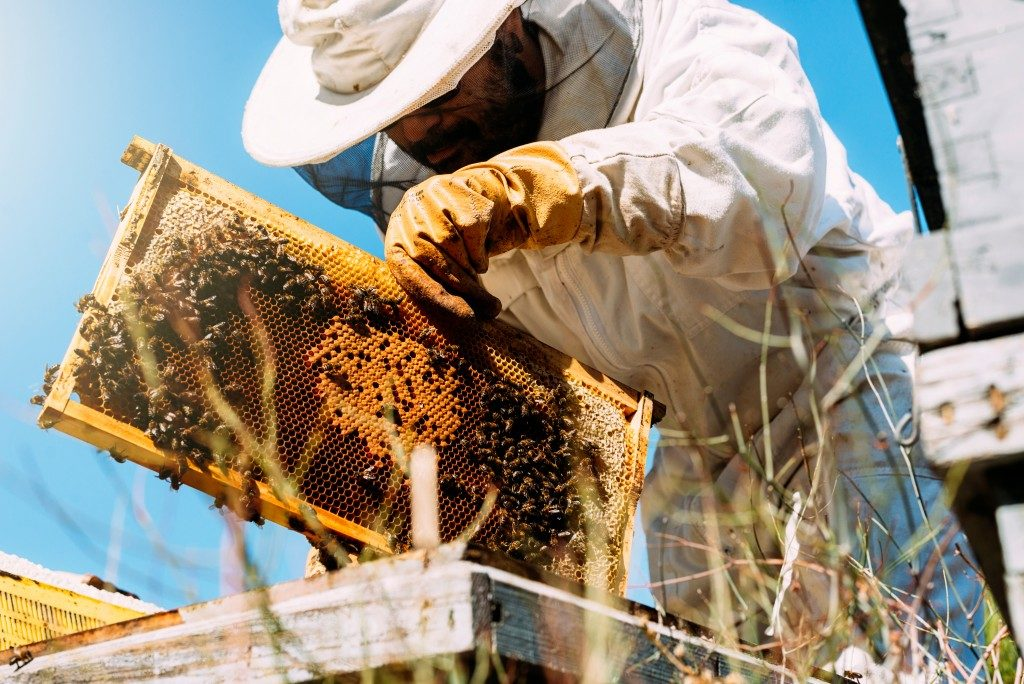 beekeeper getting the honey