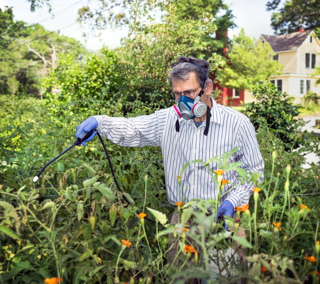 man spraying fertilizer on his crop in a small garden