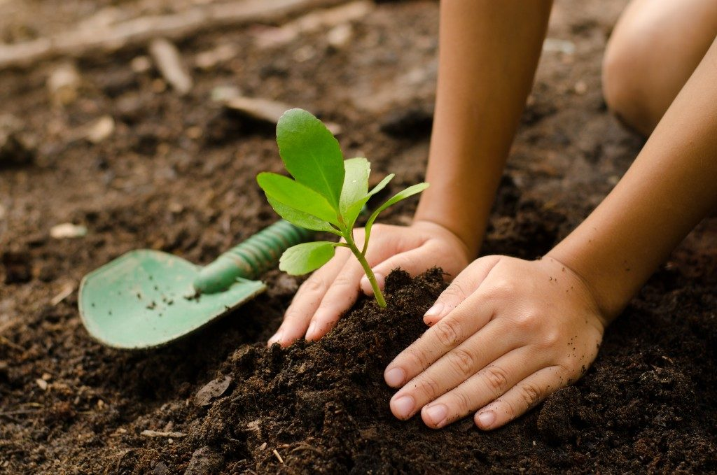 Planting young tree by kid