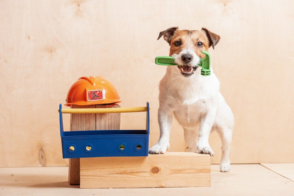 dog holding a toy hammer