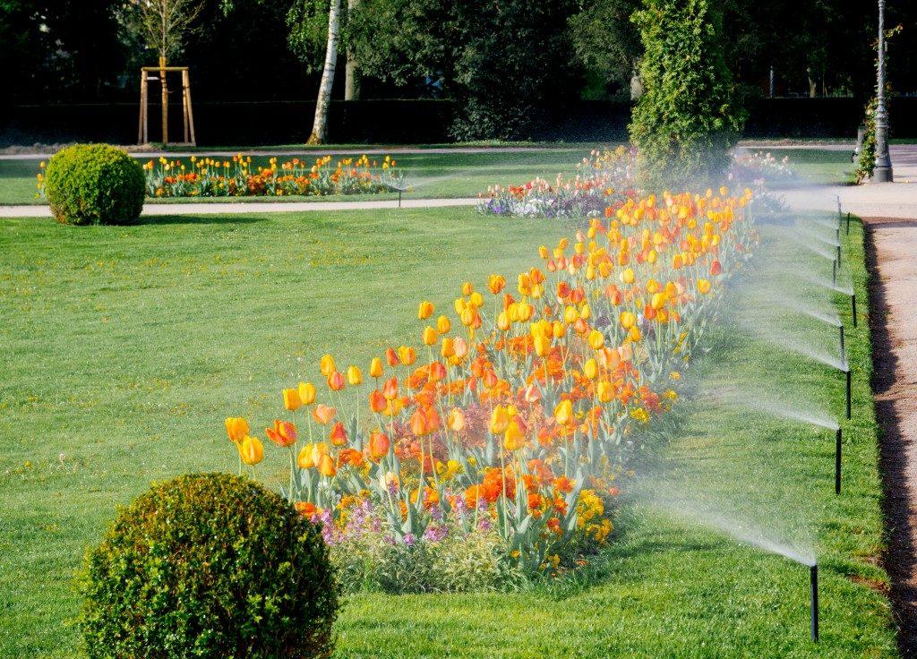 Sprinklers turned on watering flowers