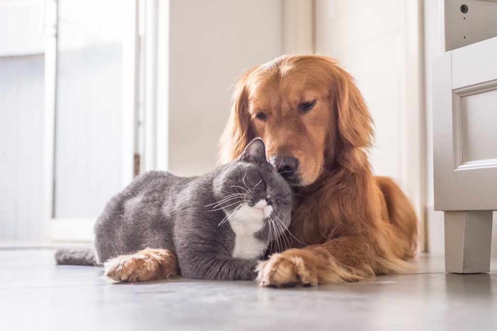 cat and dog on the floor