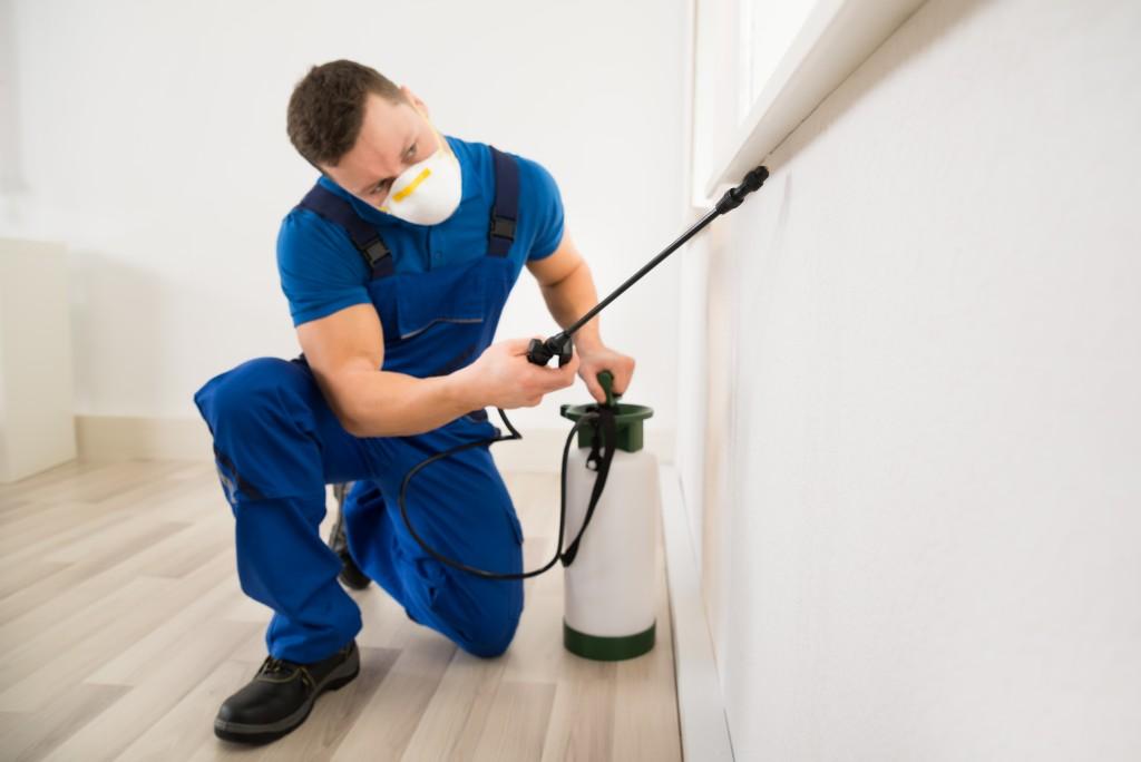 man eliminating pest